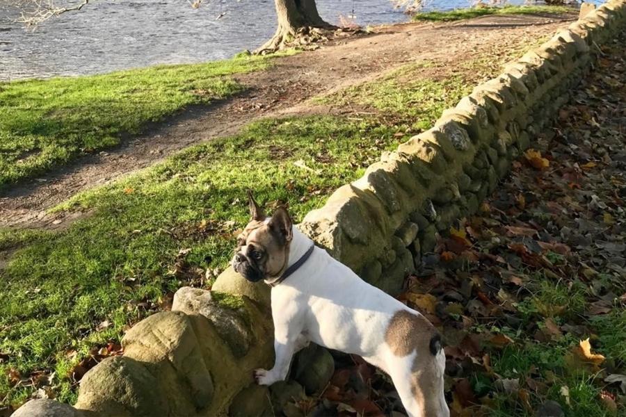 Masons Campsite River View Bolton Abbey Dog