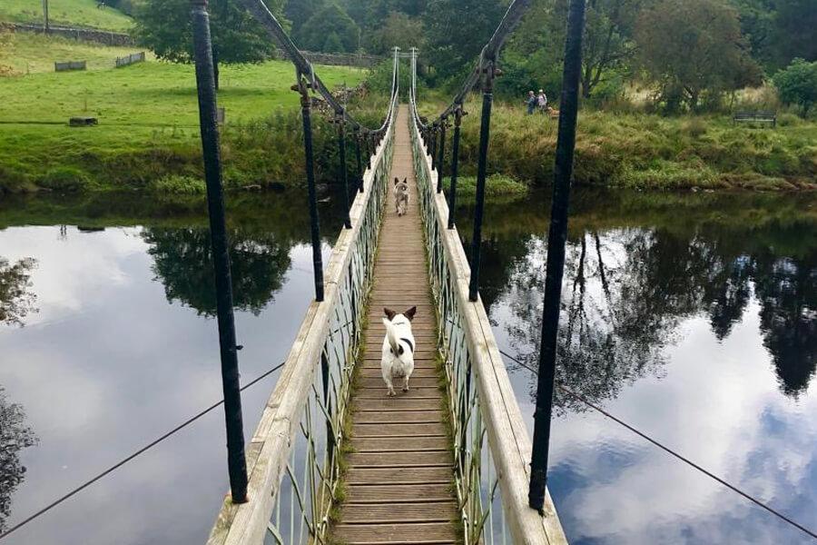 Masons Campsite Bolton Abbey Dogs on the bridge
